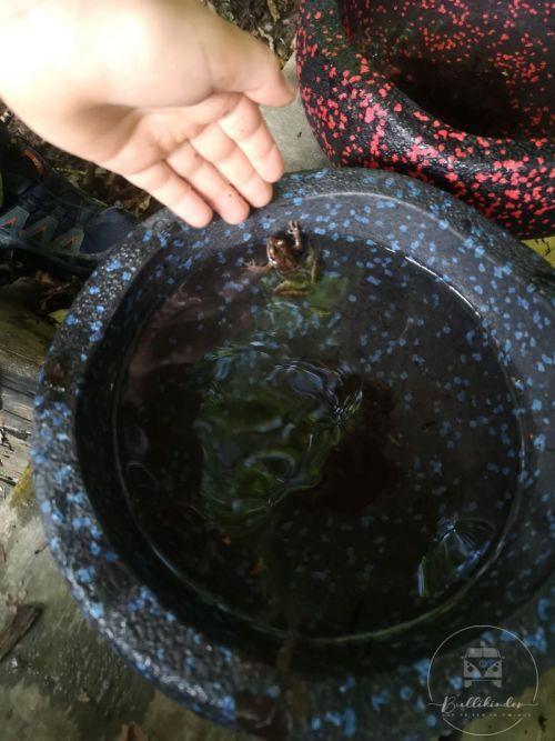 stapelsteine-draussen-frosch