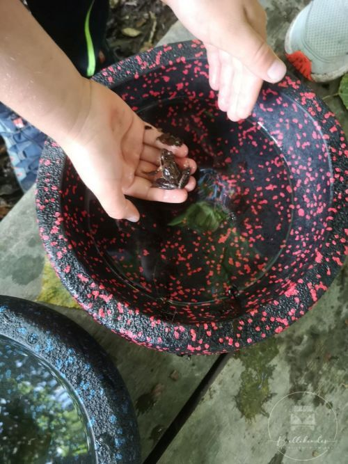 stapelsteine-draussen-frosch2